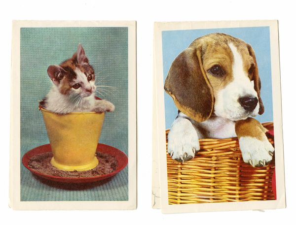 Kitty and puppy vintage cards pinkytoast typepad